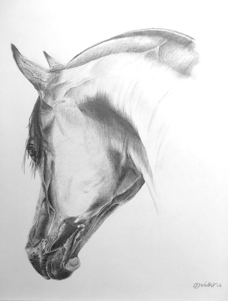 Study of Horse in Pencil