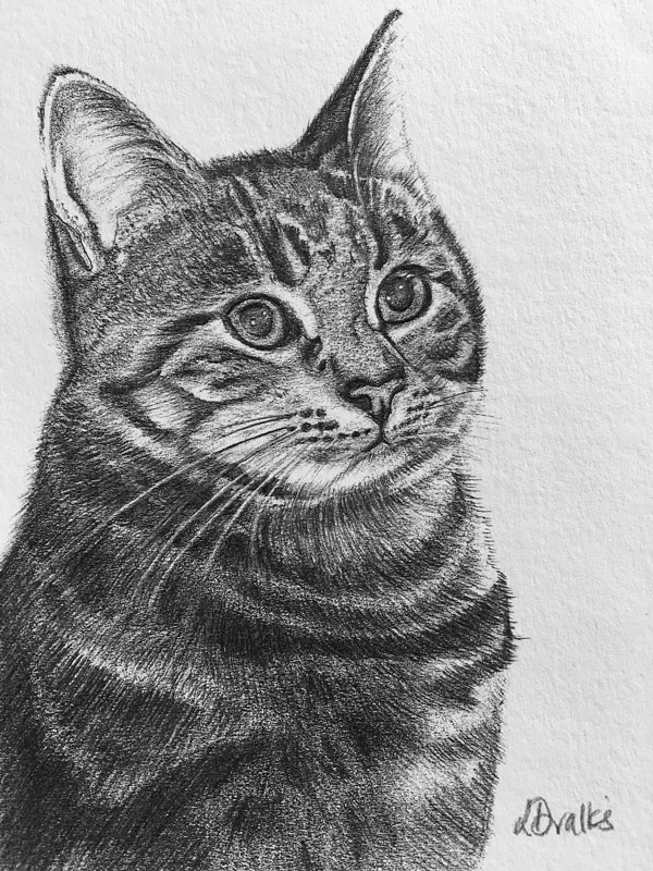 Pencil Drawn Cat by Lisa Valks